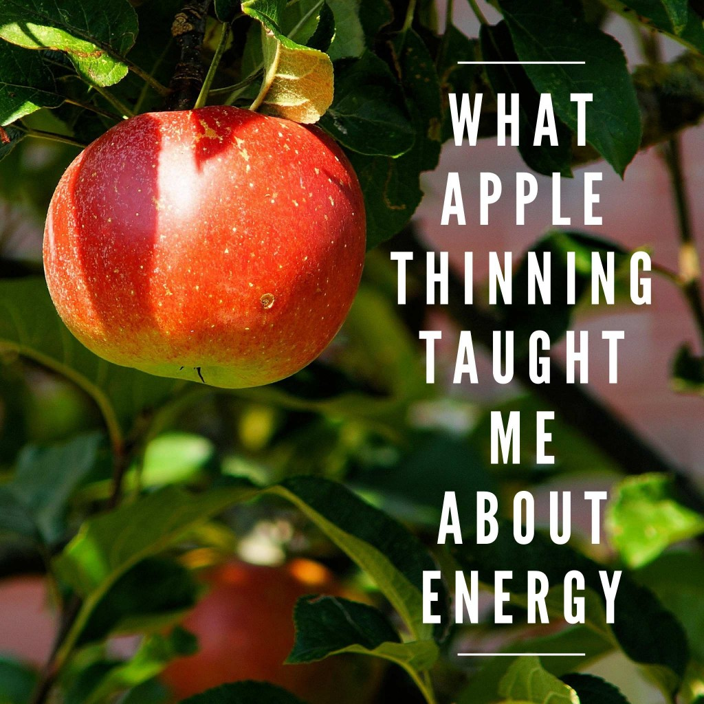 What apple thinning taught me about energy